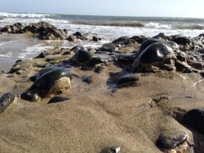 So sah es noch im Januar am Strand aus.